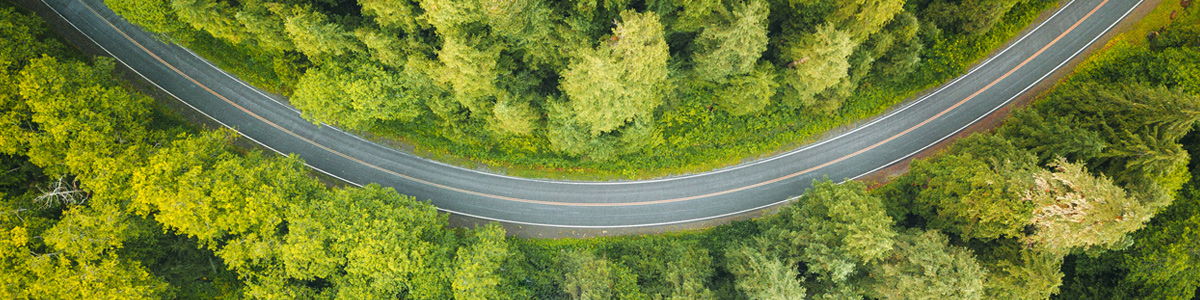 aerial photo of green trees and a curving road