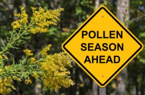 "Road sign reading ""Pollen Season Ahead"""
